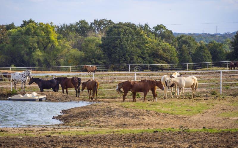 Paarden op een landbouwbedrijf in Oklahoma - land-stijl stock fotografie