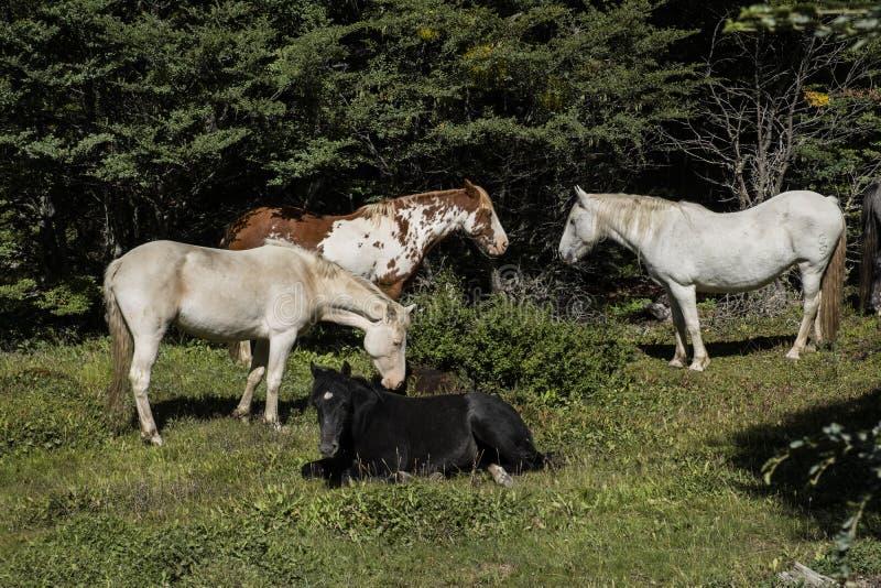 Paarden op een landbouwbedrijf in zuidelijk Patagonië argentini? royalty-vrije stock afbeeldingen