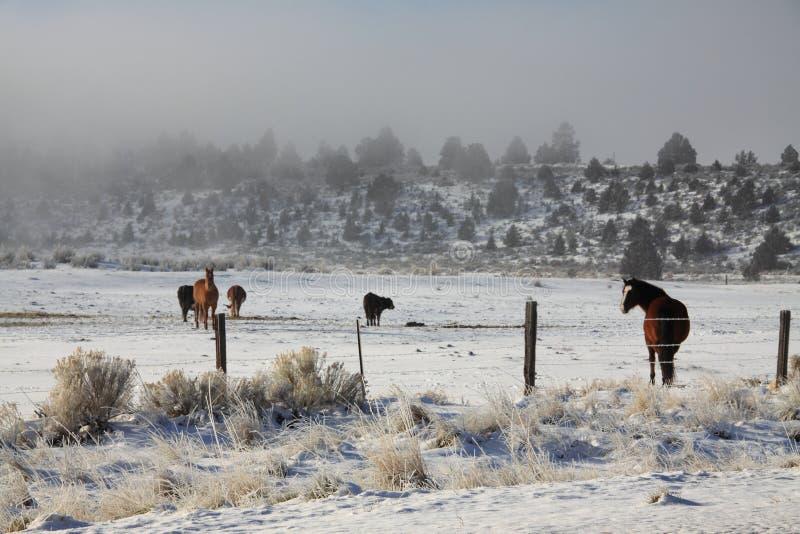 Paarden op een mistig gebied stock fotografie