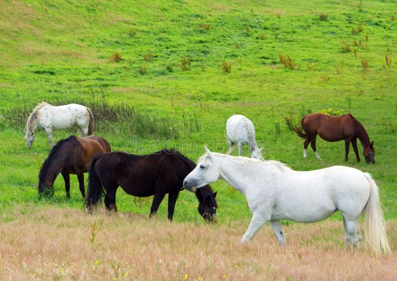 Paarden op een weide stock foto's