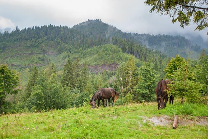 Paarden op groen alpien weiland stock afbeelding