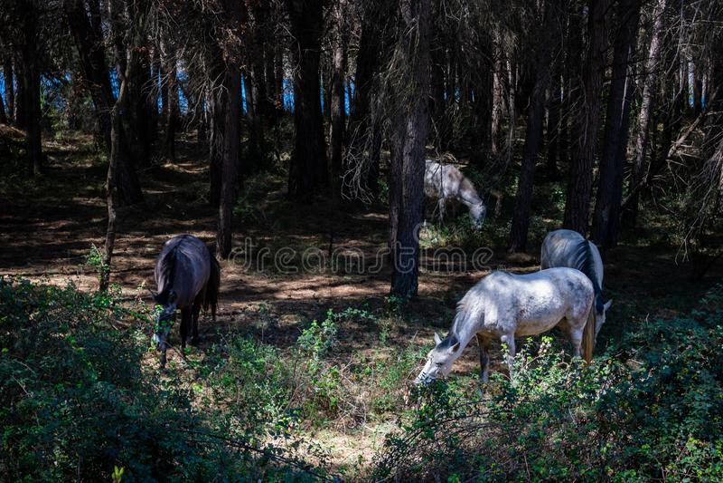 Paarden op het gebied royalty-vrije stock afbeelding