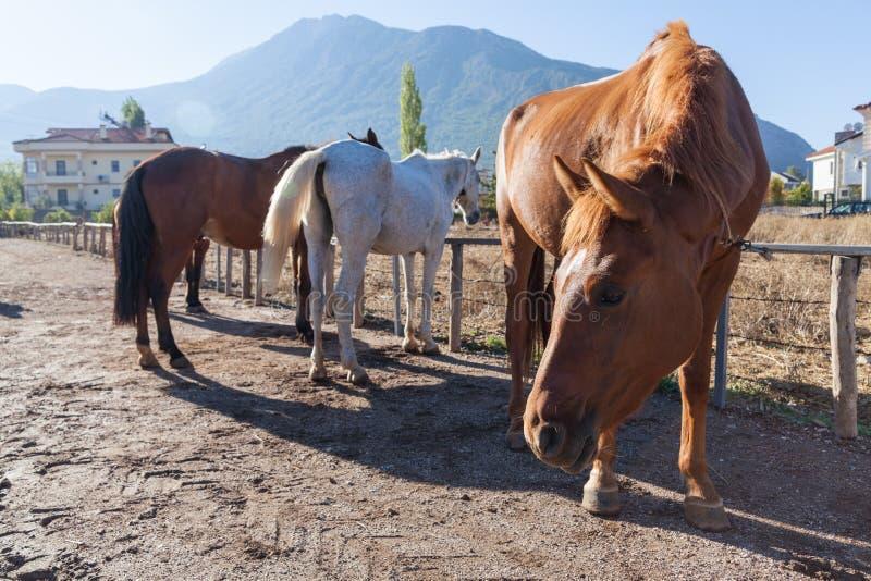 Paarden op het landbouwbedrijf stock foto's