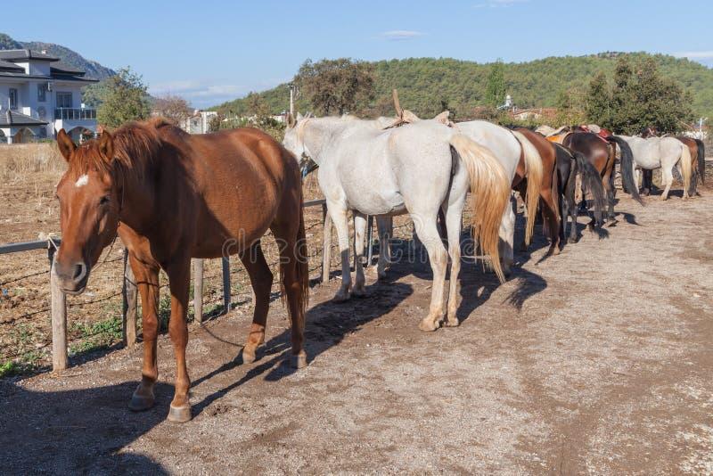 Paarden op het landbouwbedrijf stock afbeeldingen