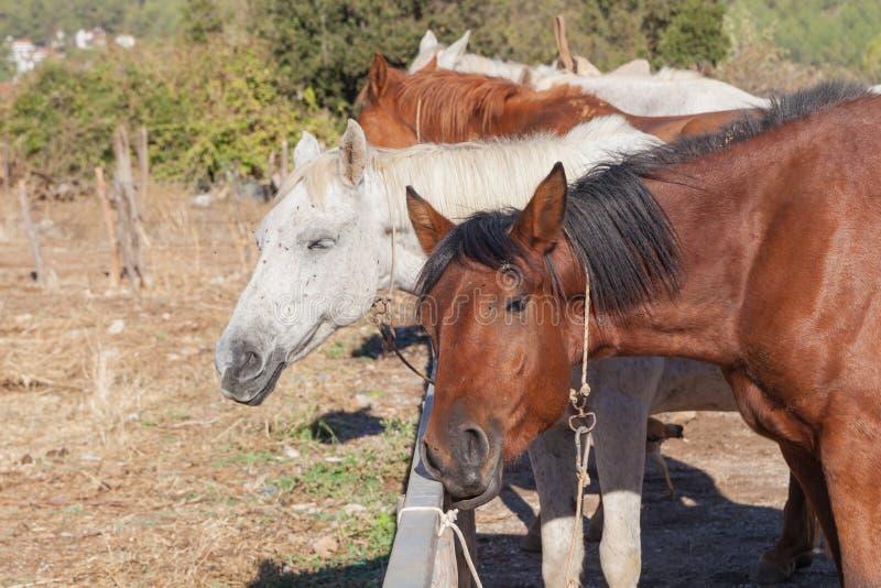 Paarden op het landbouwbedrijf stock foto