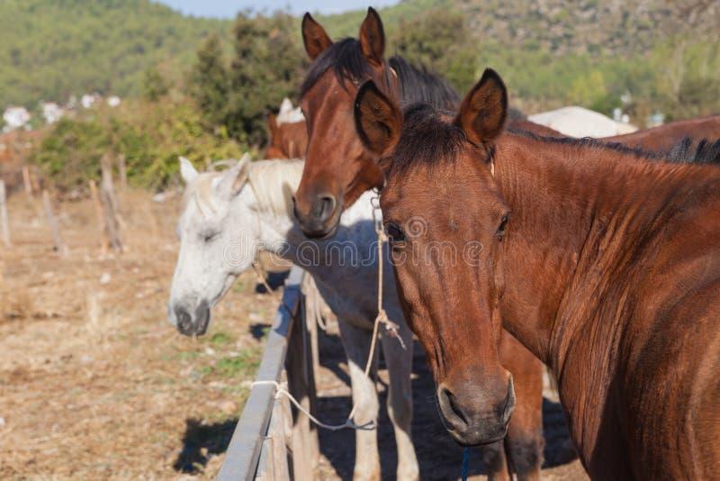 Paarden op het landbouwbedrijf stock afbeelding