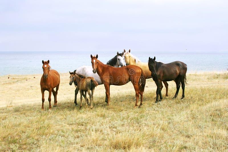 Paarden op het Strand royalty-vrije stock foto's