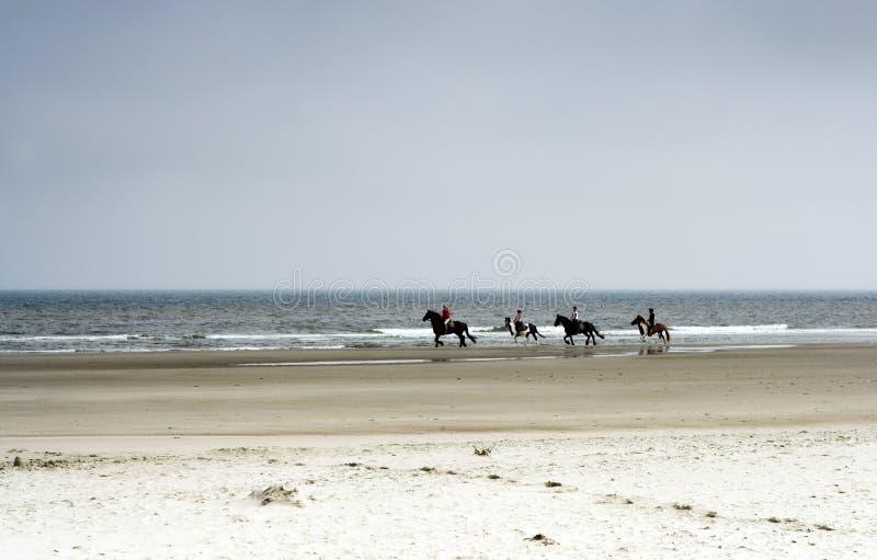 Paarden op het strand royalty-vrije stock afbeeldingen