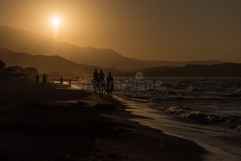 Paarden op het Strand stock afbeeldingen