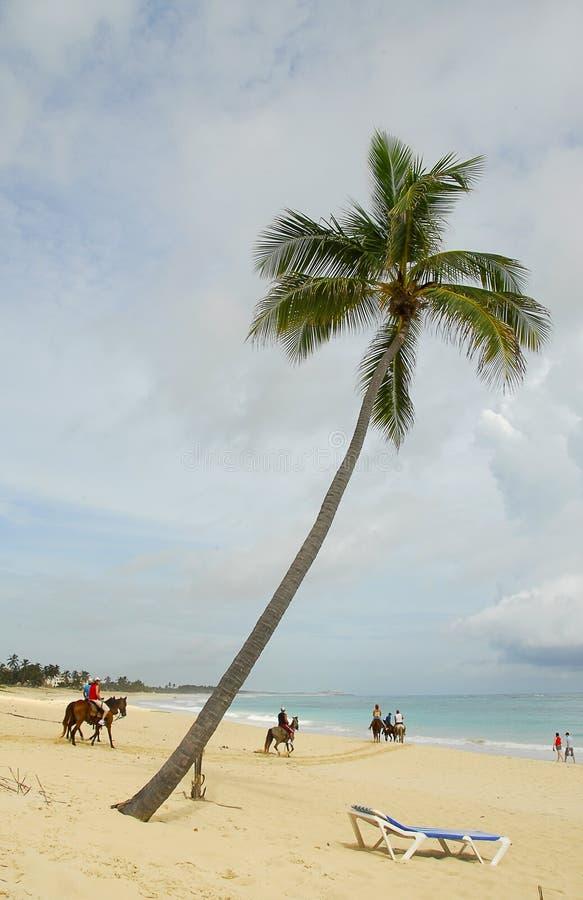 Paarden op het tropische strand royalty-vrije stock afbeeldingen