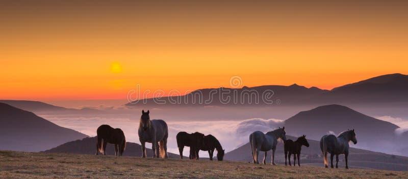 Paarden op nevelig weiland bij zonsopgang royalty-vrije stock afbeeldingen