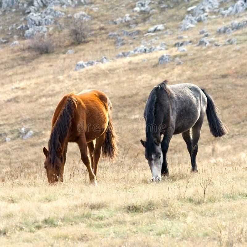 Paarden op weiland stock foto