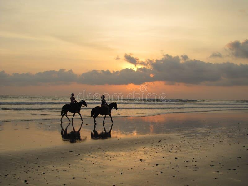 Paarden op zonsondergangstrand stock afbeelding