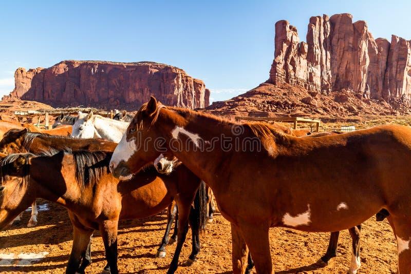 Paarden in Pen in Monumentenvallei, Utah stock foto