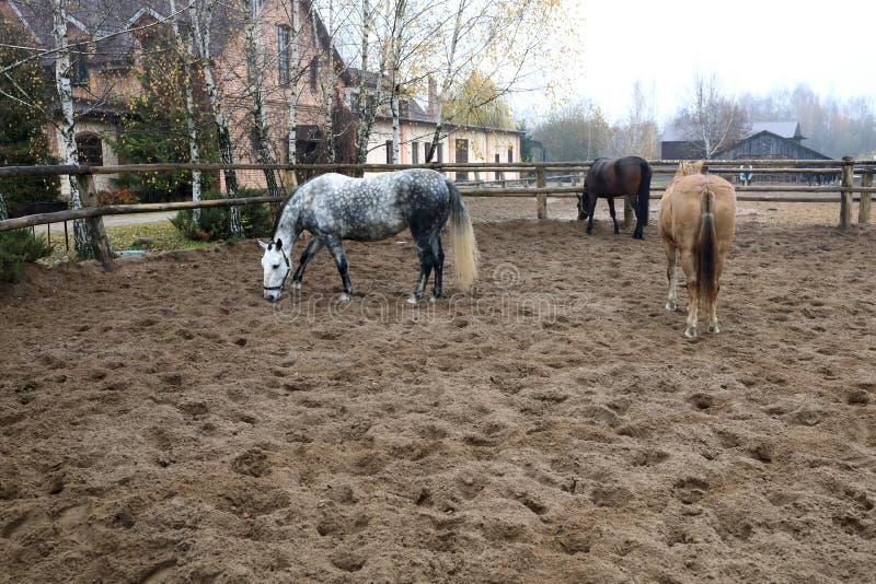Paarden in pen op het landbouwbedrijf stock afbeeldingen