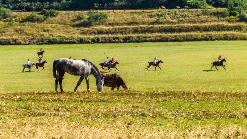 Paarden Polo Players Field Equestrian Landscape royalty-vrije stock afbeelding