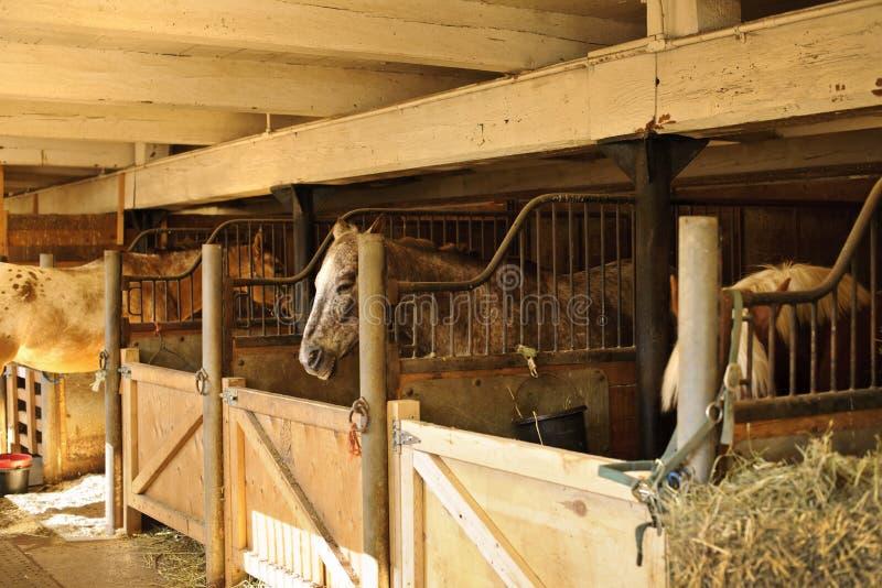 Paarden in stallen royalty-vrije stock foto's
