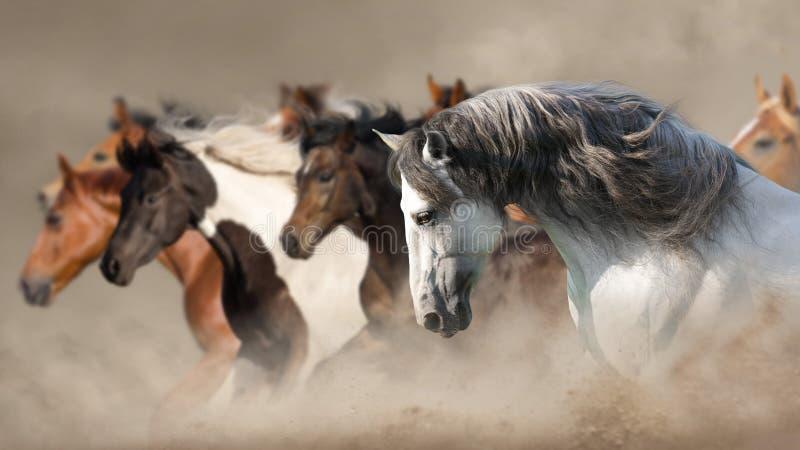 Paarden in stof stock foto