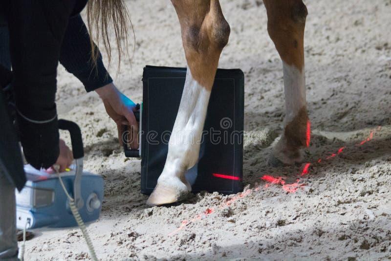 Paarden veterinair onderzoek met röntgenstraal in een verlamd paard het paard kan niet meer lopen stock afbeelding