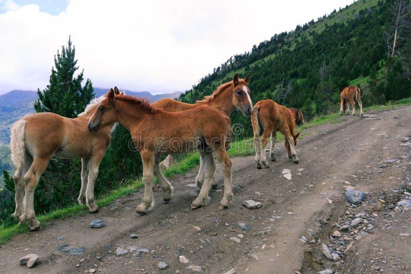 Paarden in vrijheid stock foto