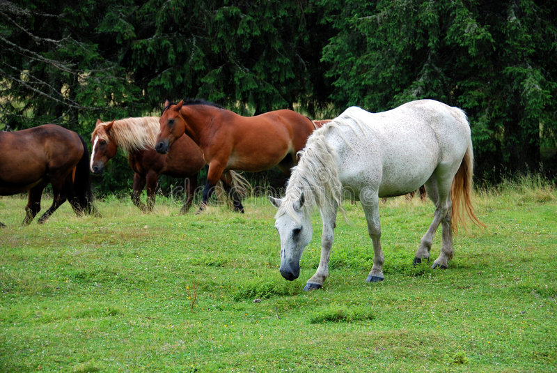 Paarden in weide royalty-vrije stock foto