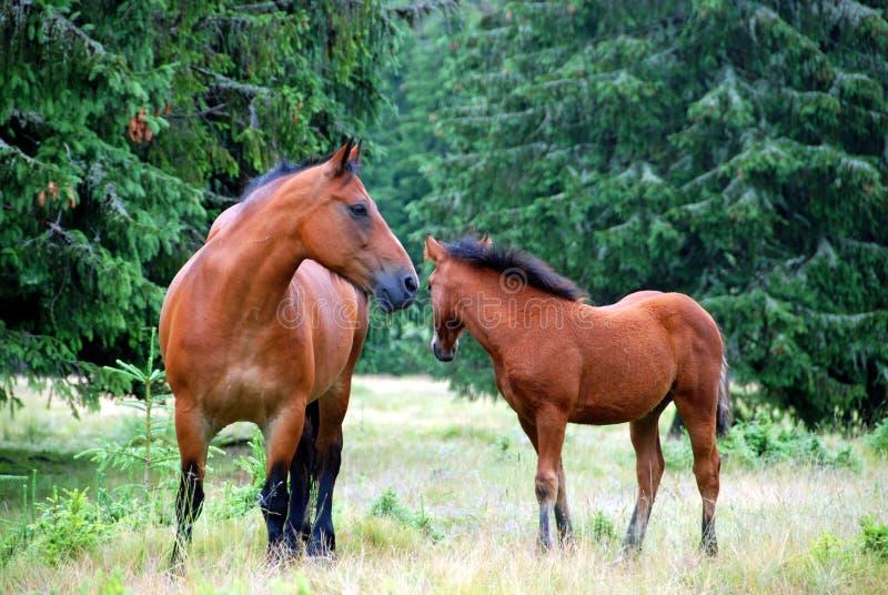 Paarden in weide stock foto's