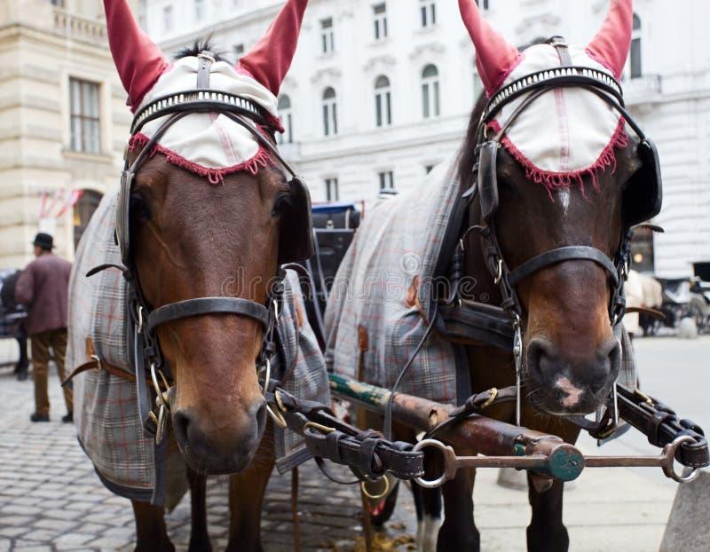 Paarden in Wenen. stock foto's