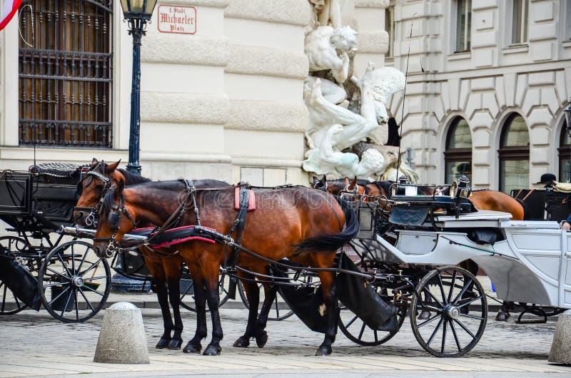 Paarden in Wenen, Oostenrijk royalty-vrije stock afbeeldingen