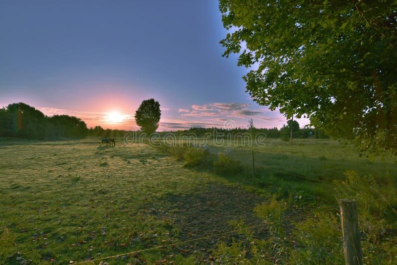 Paarden in zonsopgang royalty-vrije stock foto