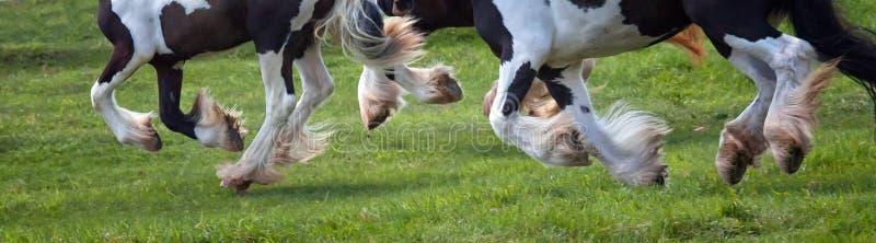 Paardenhoeven in motie royalty-vrije stock afbeelding
