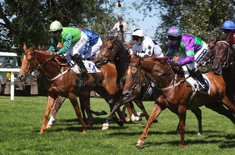 Paardenkoers royalty-vrije stock fotografie