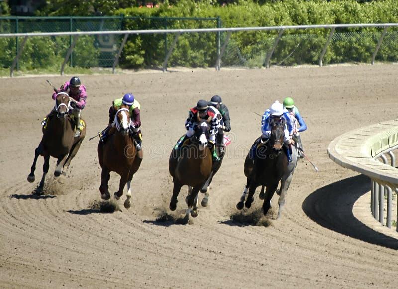 Paardenkoers stock afbeeldingen