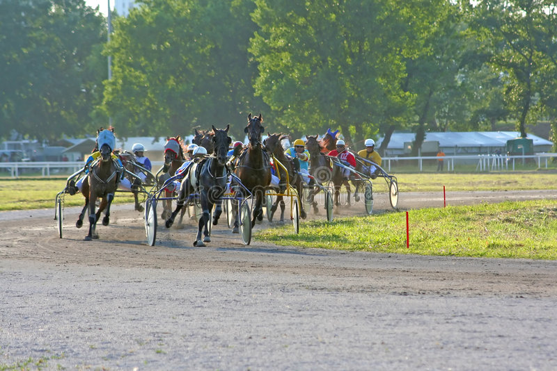 Paardenkoers stock foto