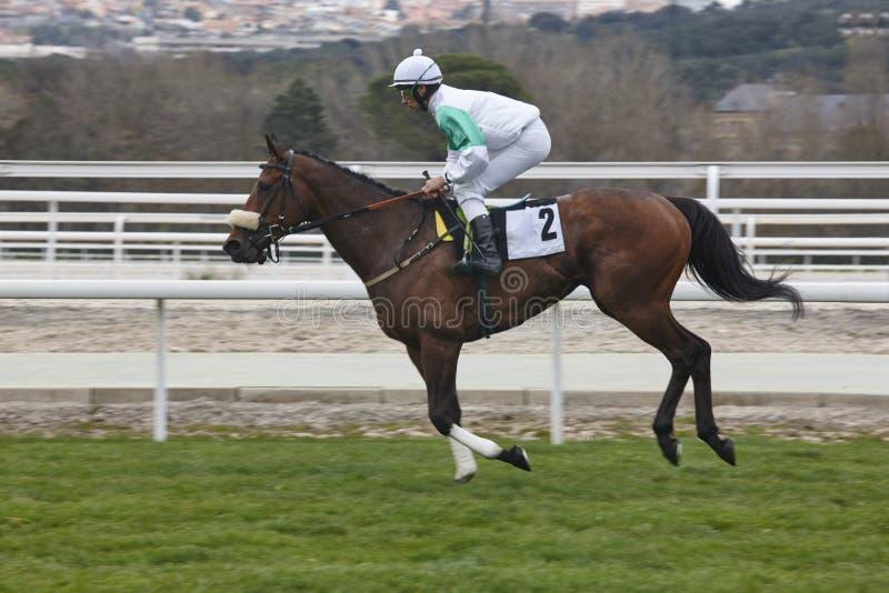 Paardenkoersopwarming De concurrentiesport hippodrome winnaar stock fotografie