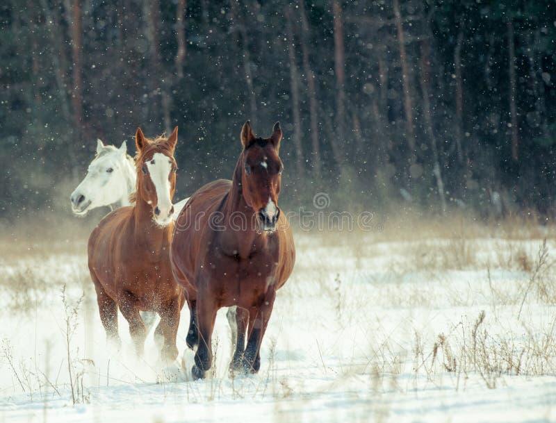 Paardenkudde in de winter royalty-vrije stock afbeelding