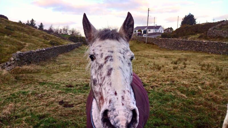 Paardenonderzoek? stock fotografie