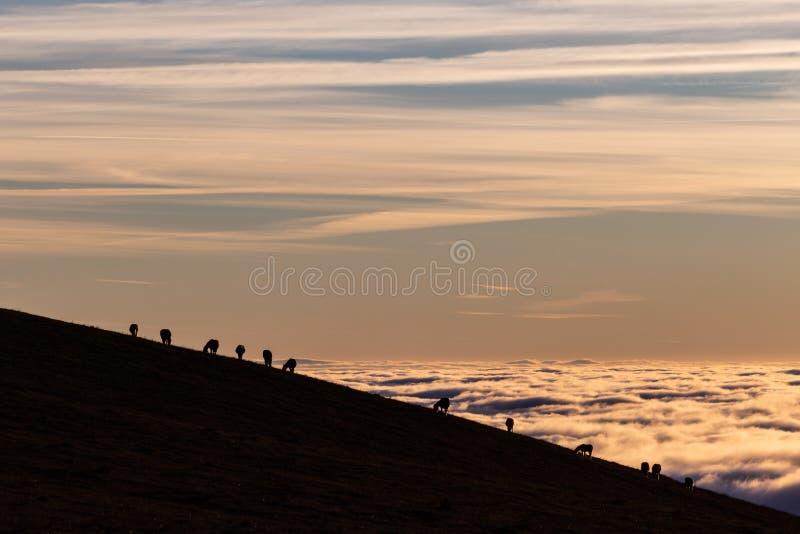 Paardensilhouetten op een berg over een overzees van mist bij zonsondergang, met mooie warme kleuren royalty-vrije stock afbeelding