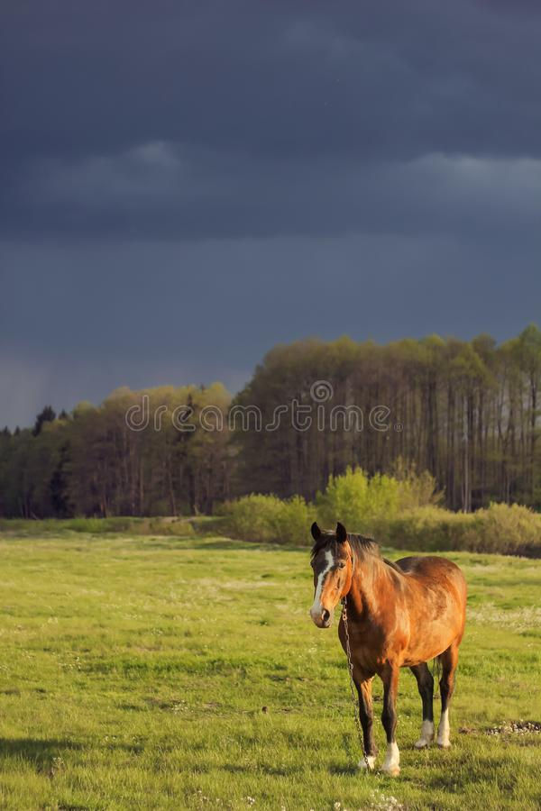 Paardenveld voor onweersbui royalty-vrije stock foto's