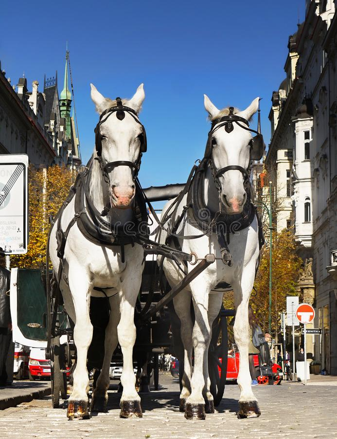 Paardenvervoer - Praag, Oud Stadsvierkant stock foto