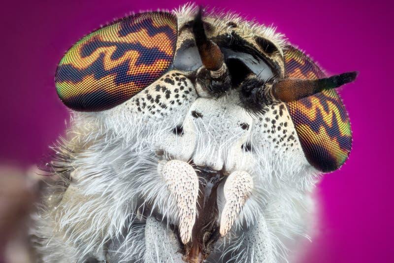 Paardevlieg macrofotografie royalty-vrije stock foto's
