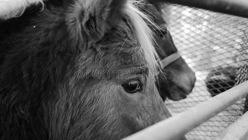 Paardgezicht stock foto's