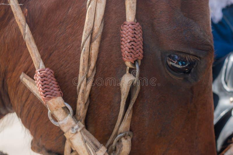 Paardgezicht in de voorgrond royalty-vrije stock foto's