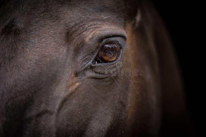 Paardhoofd - close-up van oog stock fotografie