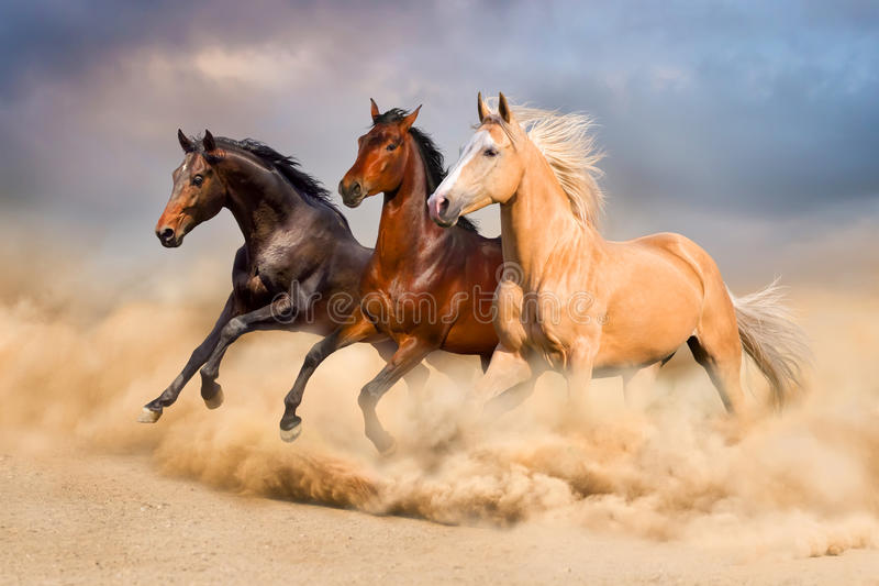 Paardkudde royalty-vrije stock afbeelding