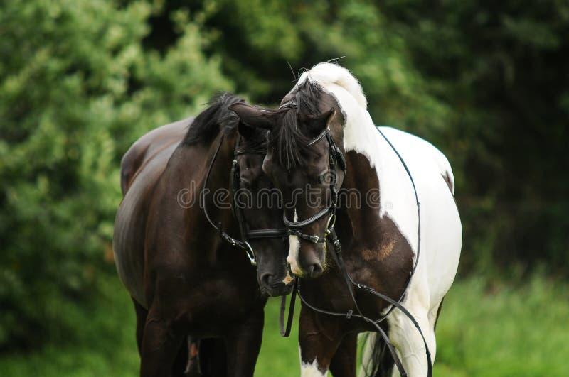 Paardpaar royalty-vrije stock foto's