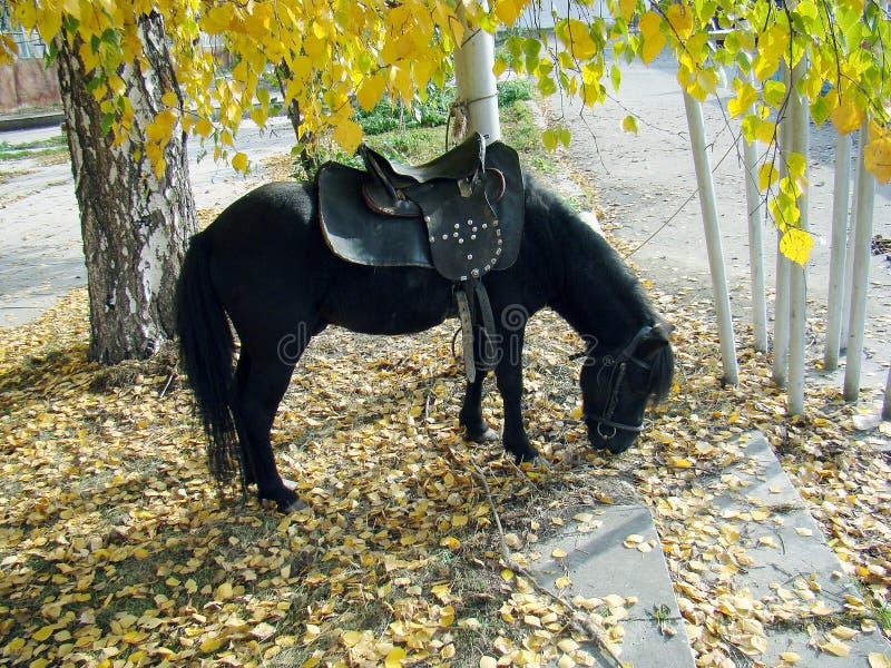 Paardponey royalty-vrije stock afbeelding