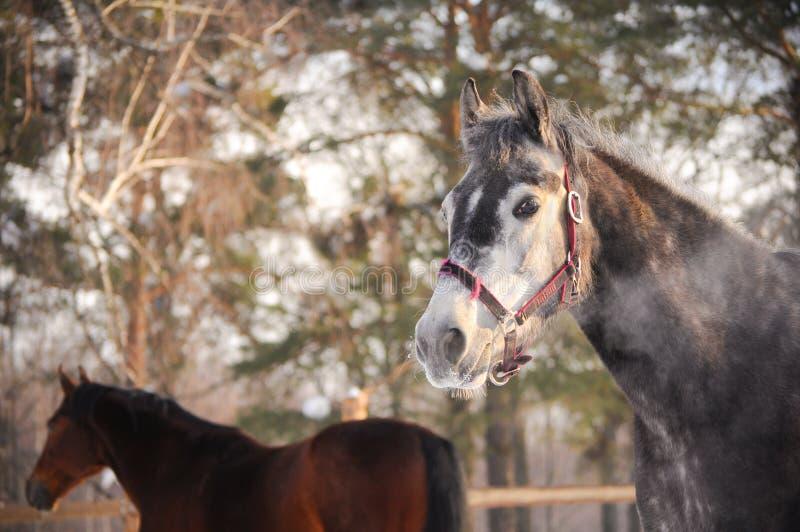 Paardportret royalty-vrije stock fotografie