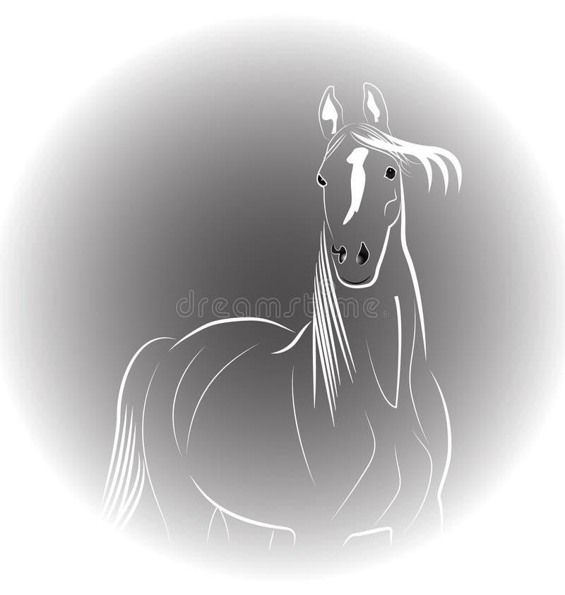 Paardportret stock illustratie