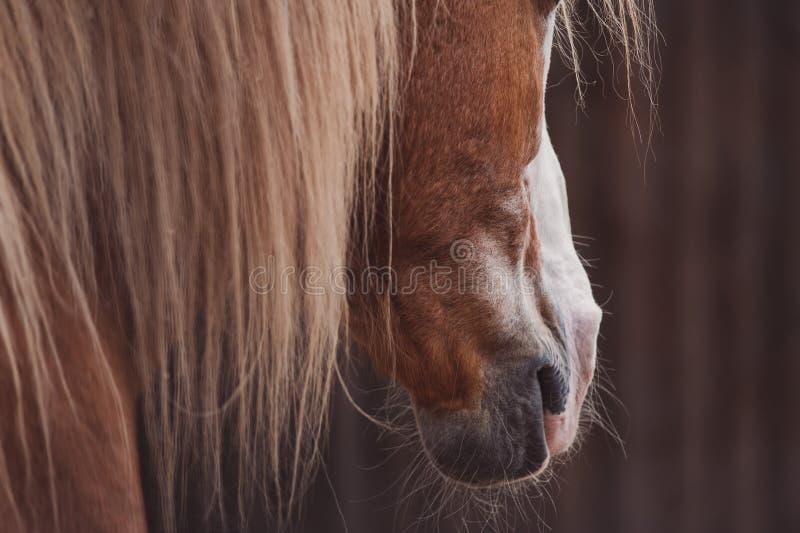 Paardportret, accent op manen royalty-vrije stock fotografie
