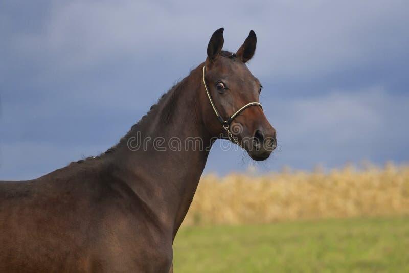 Paardportret openlucht royalty-vrije stock foto